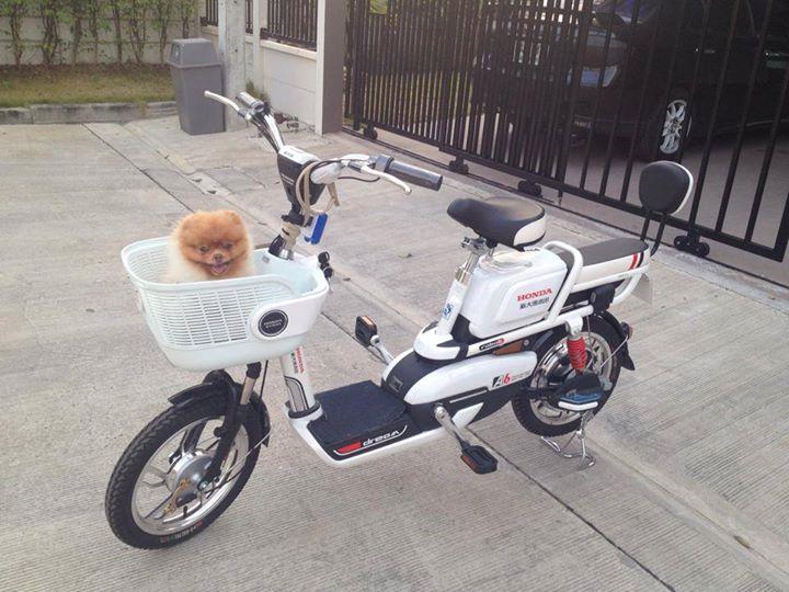 น้องหมากับจักรยานไฟฟ้า